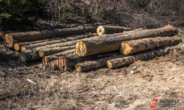 В Хабаровском крае вырубили деревьев на 26 миллиона рублей