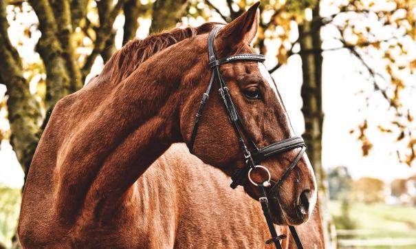 После столкновения с лошадью автоледи обратилась в суд