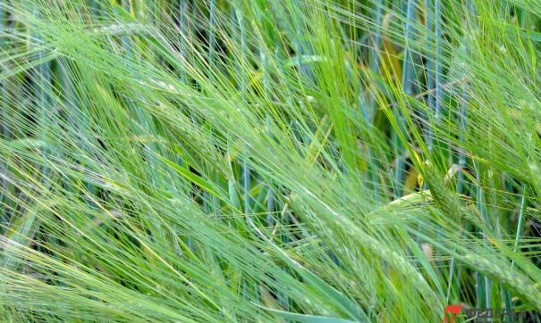 Гибель посевов достигнет около 30 %