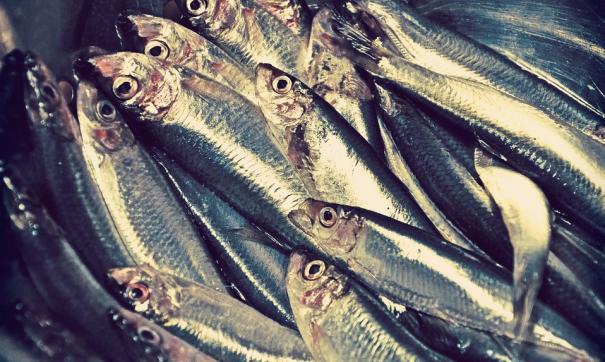 Второй случай массовой гибели рыбы
