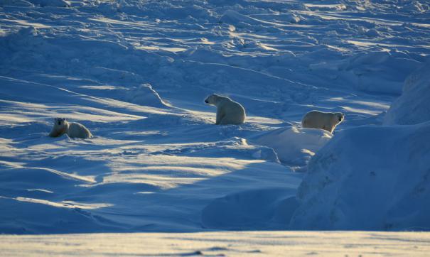 Коренные народы Арктики призвали открыто говорить о проблемах региона