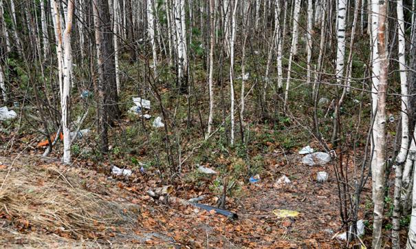 Ценные деревья в Сургуте уже вырубали