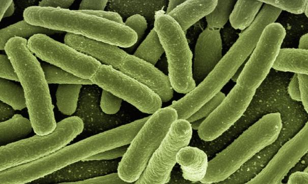 Зафиксировано 13 случаев заболевания сальмонеллезом