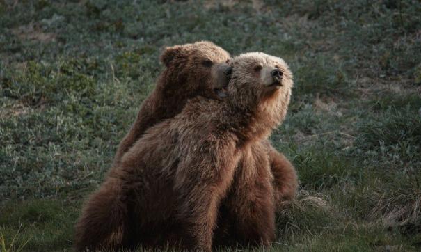 Камчатскую Долину гейзеров закрыли из-за медведей