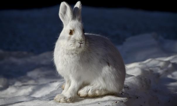 На «Кролъ и К» производят 750 тыс. кроликов в год