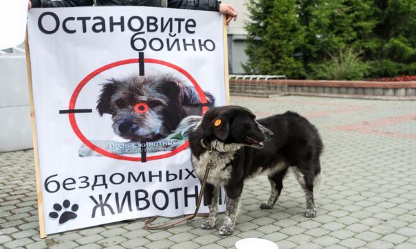 В Сургуте волонтеры бьют тревогу из-за нового отловщика собак