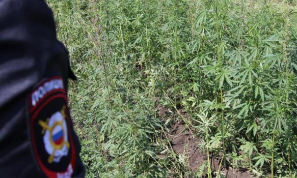 Марихуана амурская от чего лечит курение марихуаны