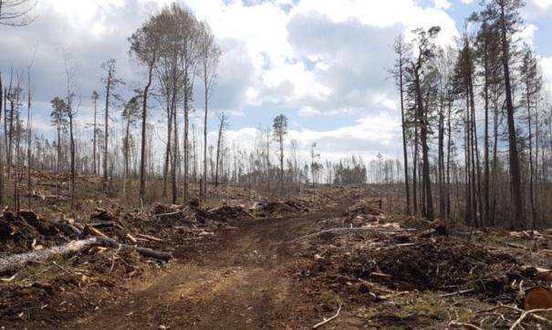 Вырубка леса в госзаказнике Туколонь