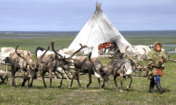 Тундровикам планируют увеличить закупочную цену на мясо северного оленя