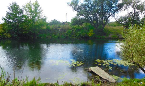 Пруд Утиный давно является непригодным для купания
