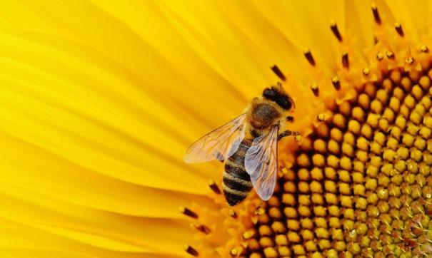 Минэкономразвития отвергло обвинения Россельхознадзора в причастности к массовой гибели пчел