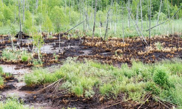Сотрудником лаборатории были взяты пробы воды и почвы