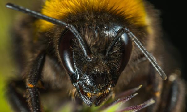 Минсельхоз заявил о гибели почти 40 тысяч пчелосемей