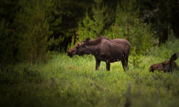 Охотоведы будут подкармливать лесных жителей в зимнее время