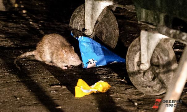 Жители Норильска пожаловались на массовое нашествие грызунов