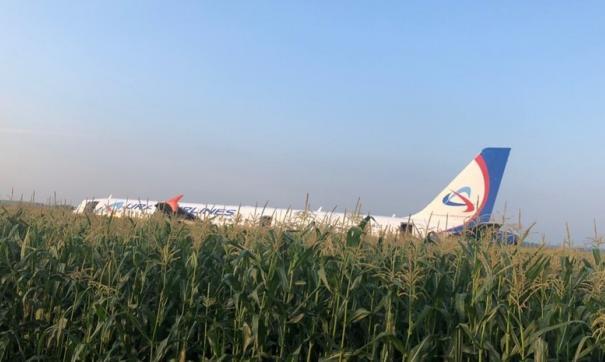 «Русмолоко» поведала опланах восстановить кукурузное поле после приземления А321