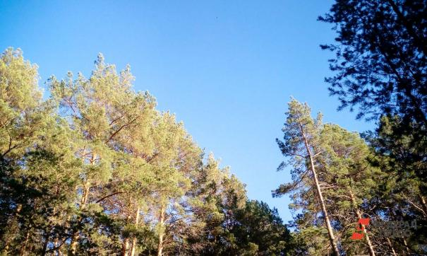 Гилевская роща лишится части деревьев, а в Затюменском заменят дорожки