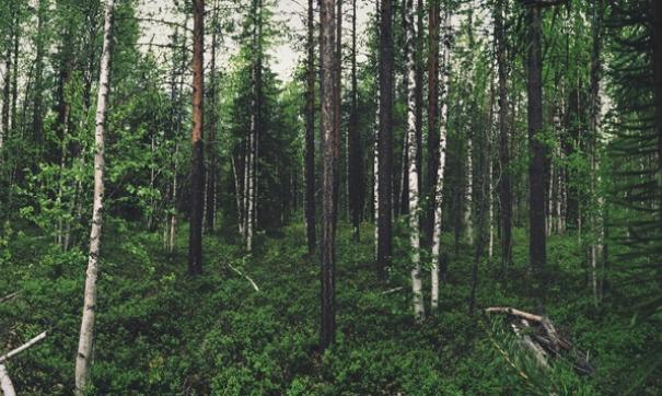 Леса Тюменской области обязательно сохранят для потомков