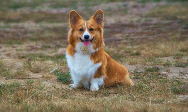 Ученые доказали пользу домашних животных для здоровья владельца