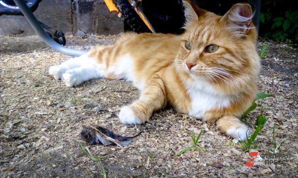 17 августа – Всемирный день защиты бездомных животных