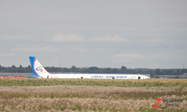 Орнитологи заявили о создании «паспорта аэропорта» после ЧП с А321