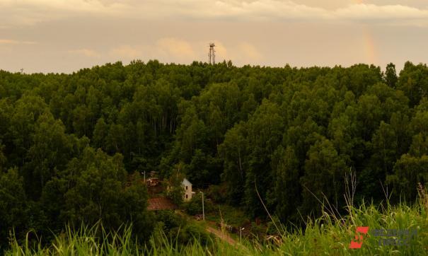 В Забайкалье уничтожили лес ради добычи золота
