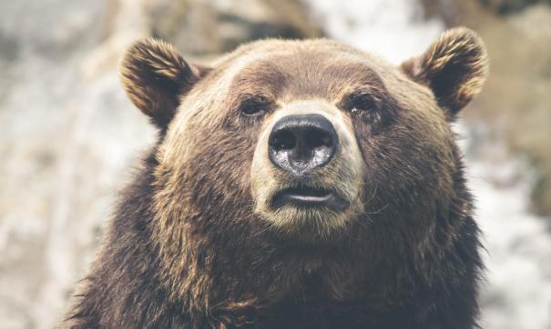 Медведь пробрался к школе в центре Магадана