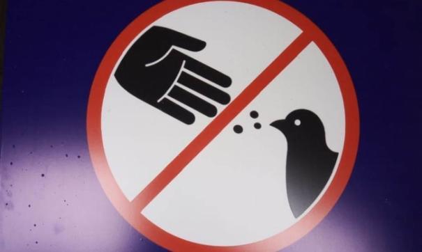 Мэрия Магадана признала, что история с голубями затянулась