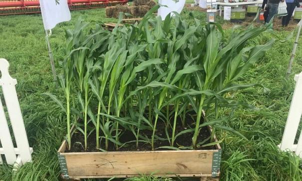 На «Дне поля» представили 100 гибридных сортов сои и кукурузы, гибриды рапса из Германии