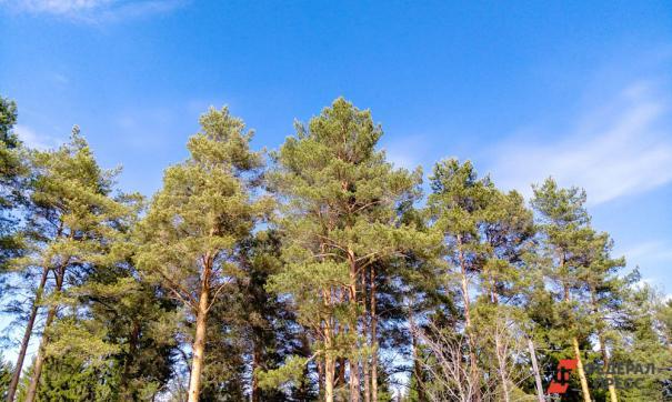 «Единая Россия» высадит более миллиона деревьев