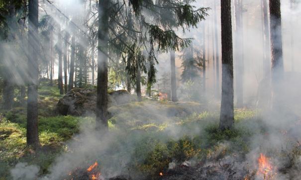 На территории Иркутской области продолжает действовать 140 очагов