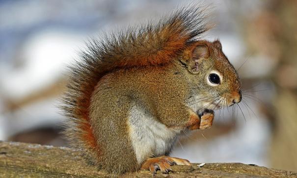 Тюменцам предлагают покормить белочек вкусными орешками