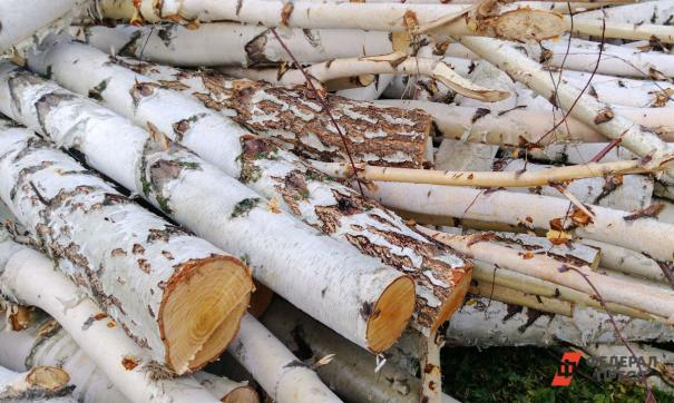 В суде женщина указала, что имела все основания для рубки деревьев