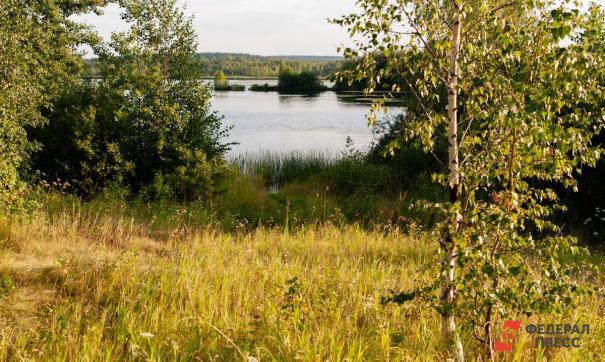 ЕР высадила более трех миллионов деревьев