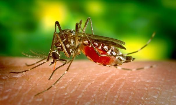 Комары-переносчики.