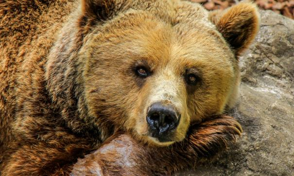 Медведь напал на работницу зоопарка в Уссурийске