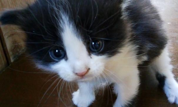 В Самаре нашли квартиру с умирающими кошками