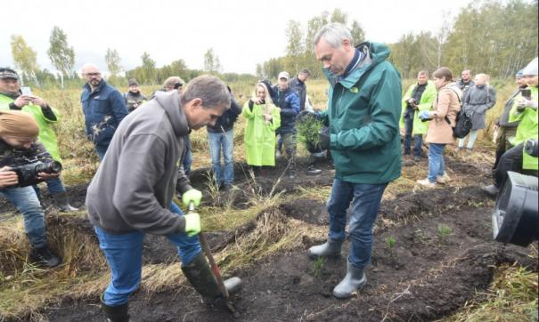 Экологический проект по сохранению лесов «Посади лес» в Новосибирской области реализуется с 2016 года