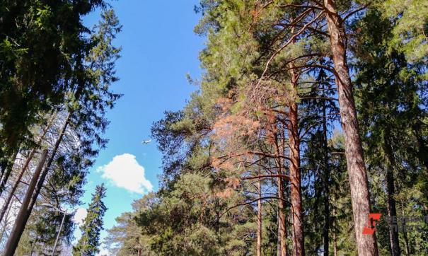 Сумма причиненного ущерба за вырубку леса составила свыше 2 миллионов рублей