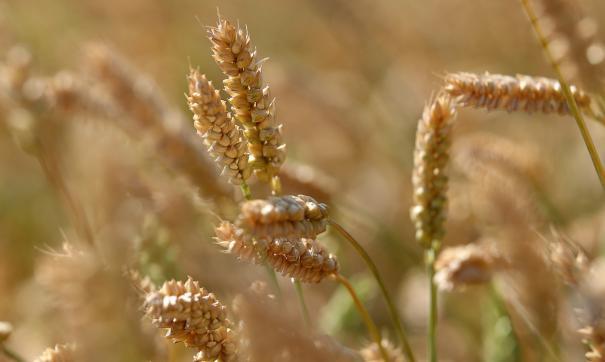 Урожай собран на площади 472 гектара