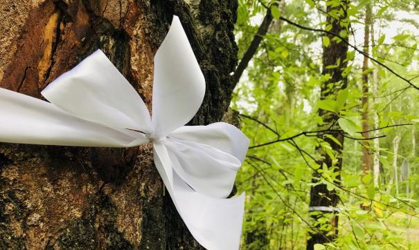 В Озерске активисты вступились за лес