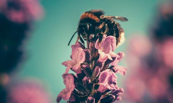 Пчелы смогли на глаз определить картинку с большим количеством объектов