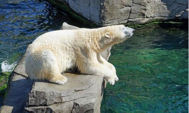 С новыми игрушками медведи будут вести более активный образ жизни