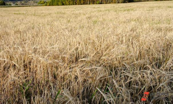 Эксперты предсказали россиянам недоедание из-за экспорта