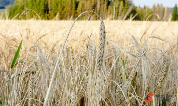 Тюменская область потребляет более 1 миллиона 300 тысяч тонн зерновых в год