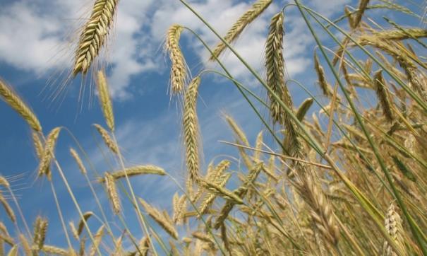 Из 1,4 миллиардов рублей направленных на помощь аграриям Приангарья 900 миллионов выделены правительством региона