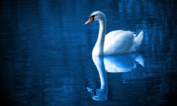 Птица попала в ледовый плен реки. Ее пришлось выручать добровольцам