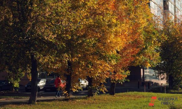 В начале октября в сибирские регионы вернется золотая осень