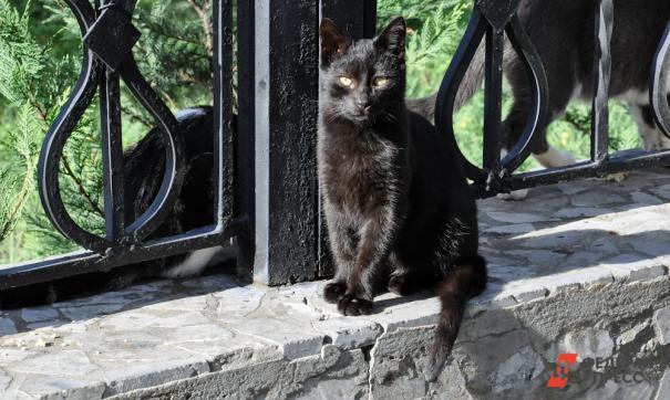 Зоозащитники Екатеринбурга перестали раздавать черных кошек