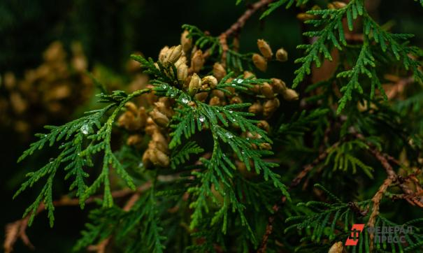 Новый лесной кодекс разработают к 2020 году